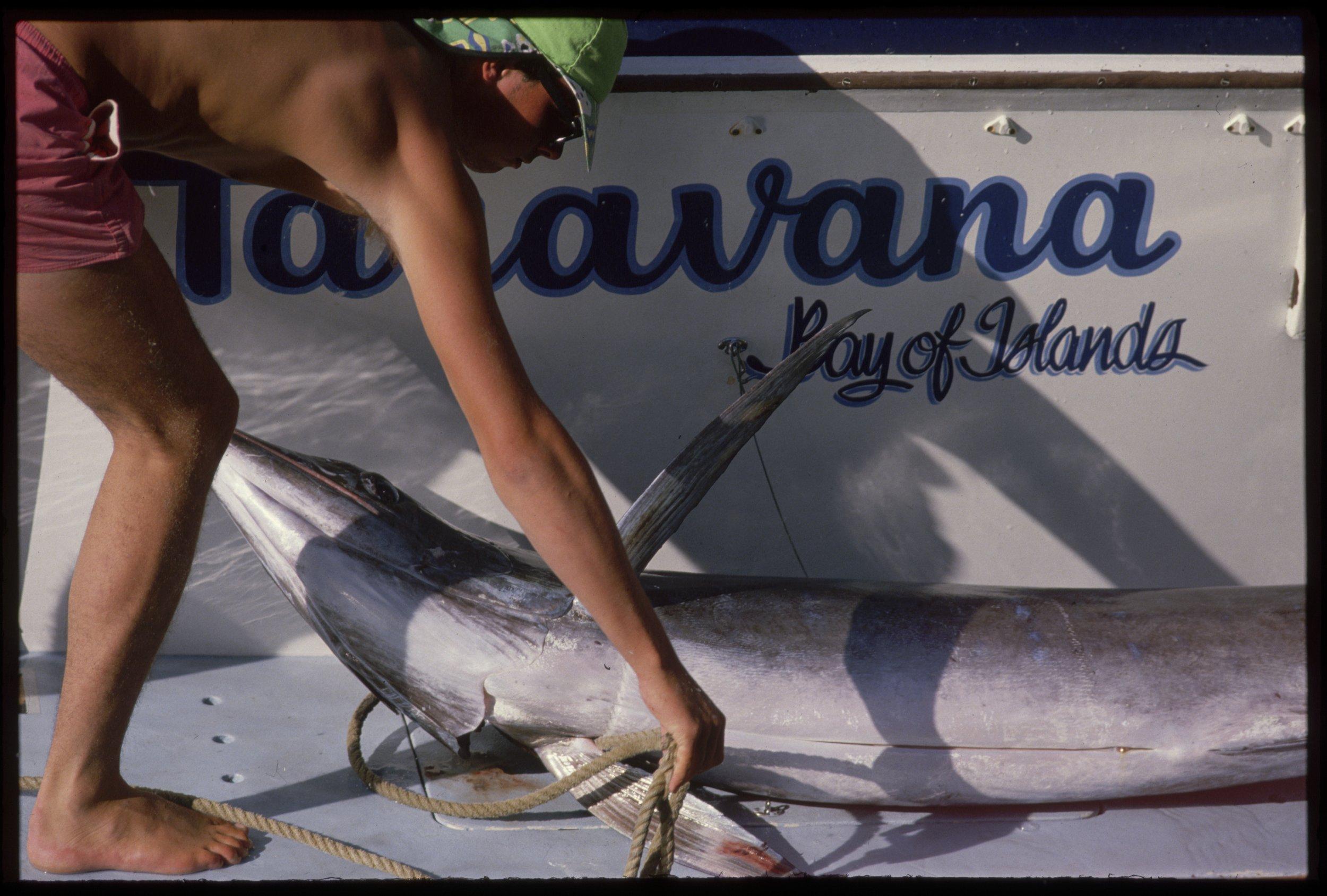 Marlin fish on board boat