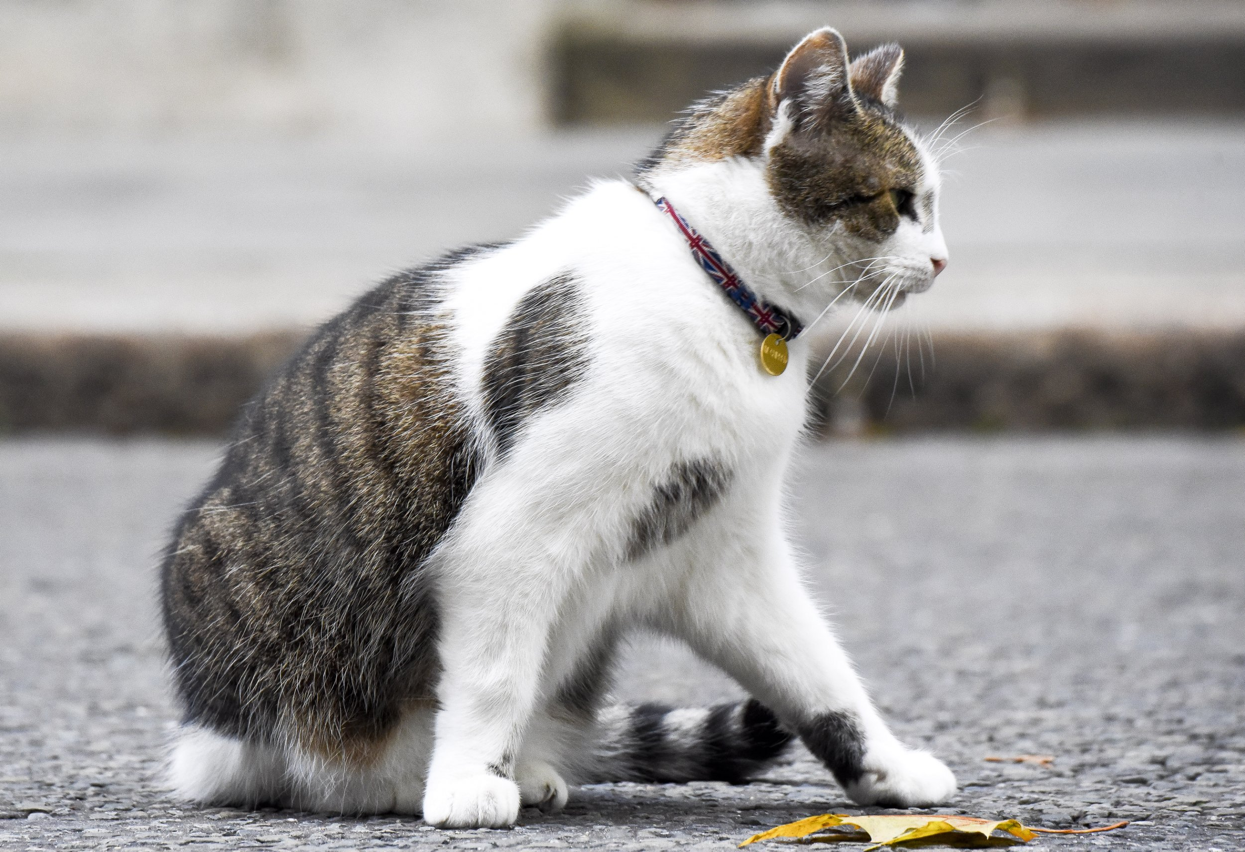 Larry the Cat, Theresa May