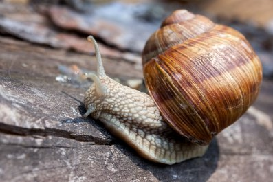snail stock getty