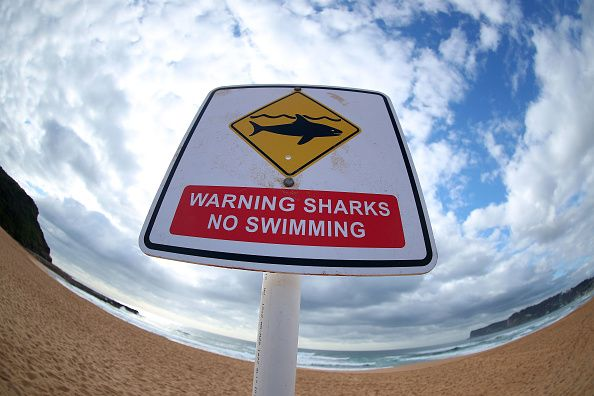 Sharks No Swimming