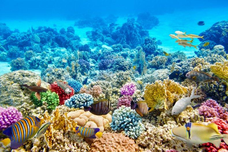 Belize coral VitalyEdush Getty Images