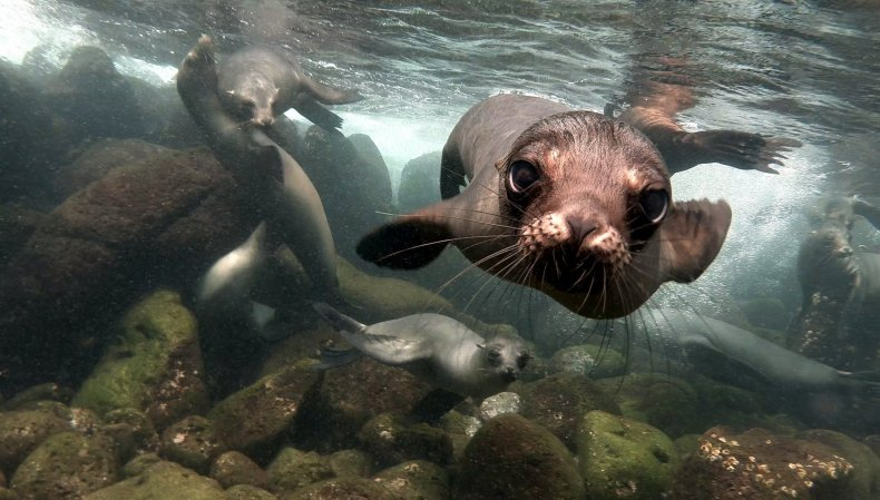 Sea lion Galapagos MakingSauce Getty Images