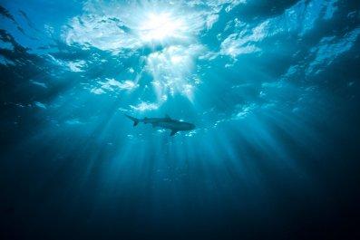 Shark, Woman, Swimming