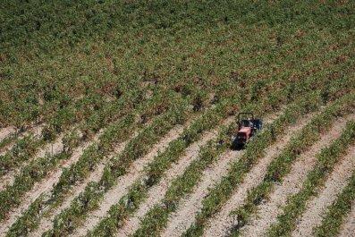 Italian field