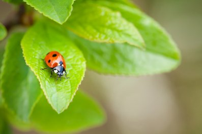 ladybug lady bird insect nature stock getty