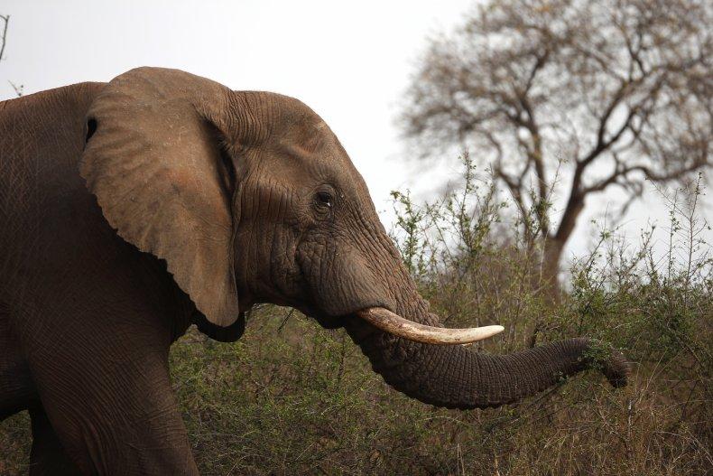 Elephant, trampled, security guard, Kruger National Park
