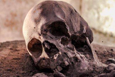 skull human remains skeleton stock getty