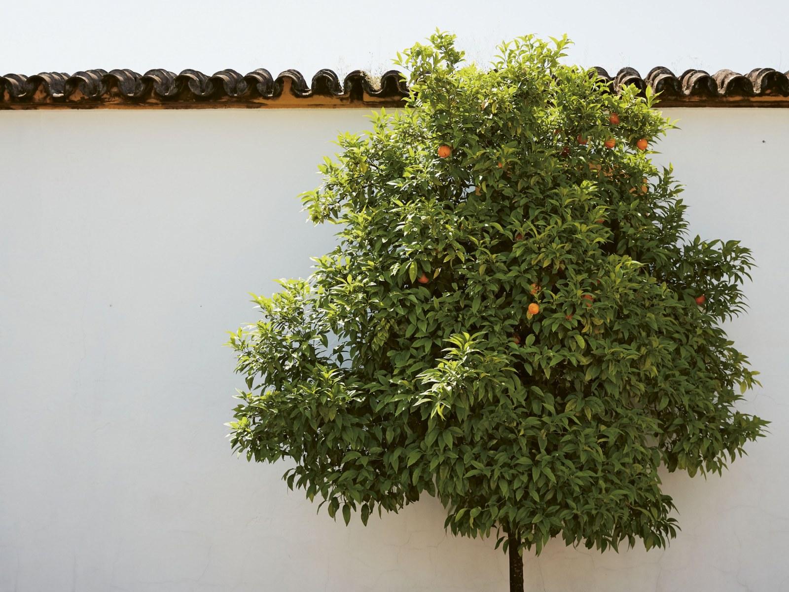 Amazing Andalusia: Spain's Hidden Secret Revealed