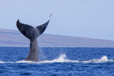 Donald Trump, Whales