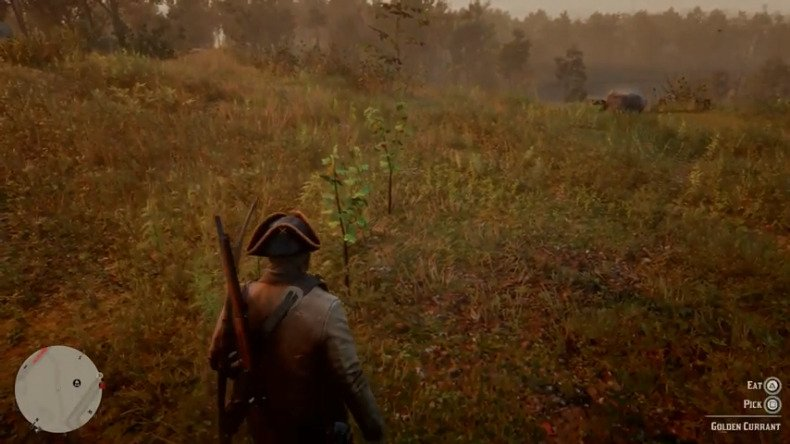 Red Dead Redemption 2 Online Golden Currant Seasoned Game Wild Carrot Location