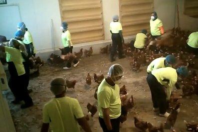 Bridgewater Poultry