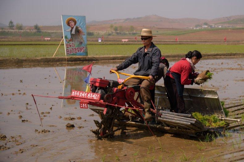 north korea food shortage drought