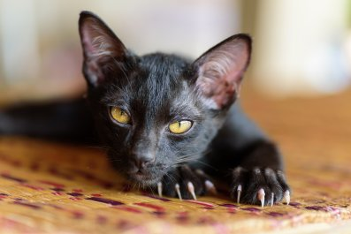 black cat kitten pet animal stock getty