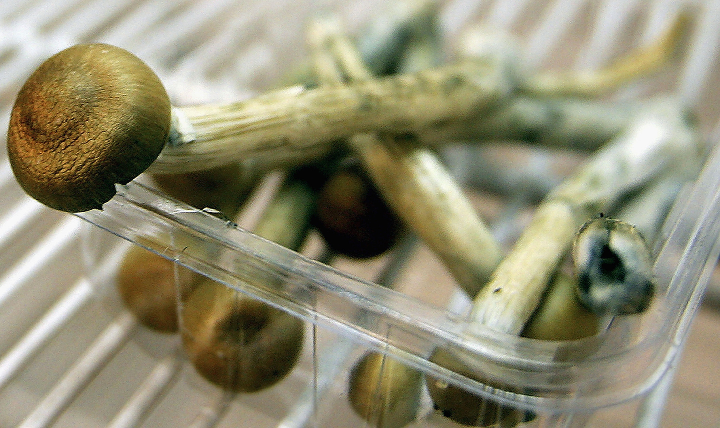 Magic Mushrooms Guide: Where Shrooms Are Legal and How To