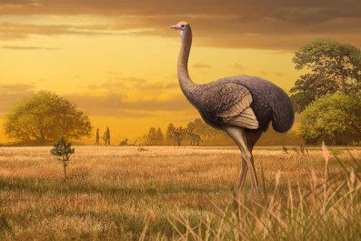 giant bird crimea