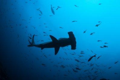 Shark, Florida beach