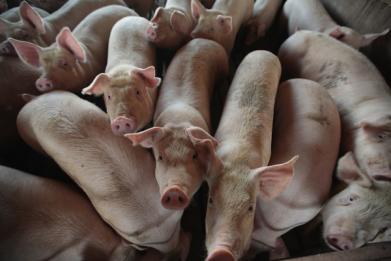 Pig Intestines Splattered Across Missouri Highway Leads to Major Road Closures