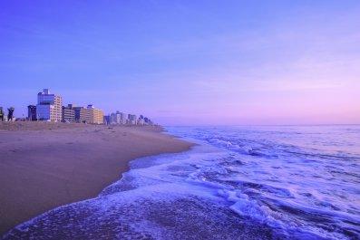 Sea Lice, Virginia Beach