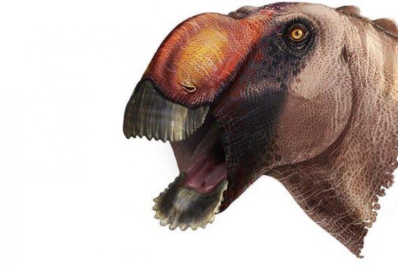 Aquilarhinus palimentu, dinosaur