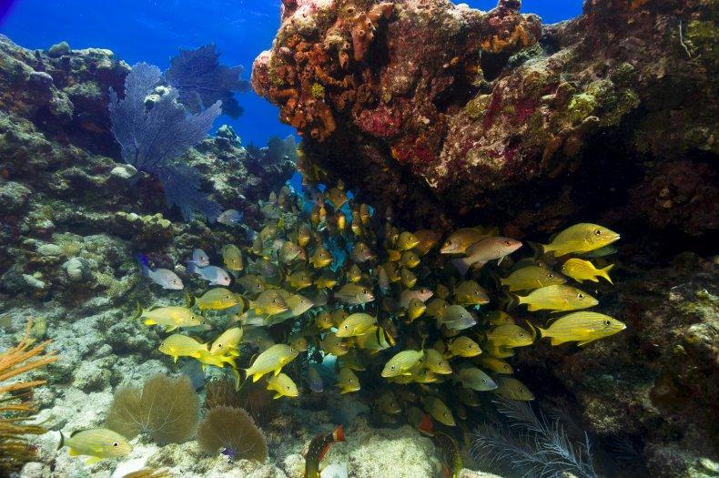 coral reef, florida keys, snapper, ocean, fish,sea