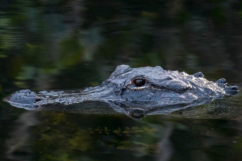 Meth, Alligator
