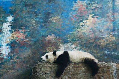 giant panda China Beijing Zoo tourist rocks