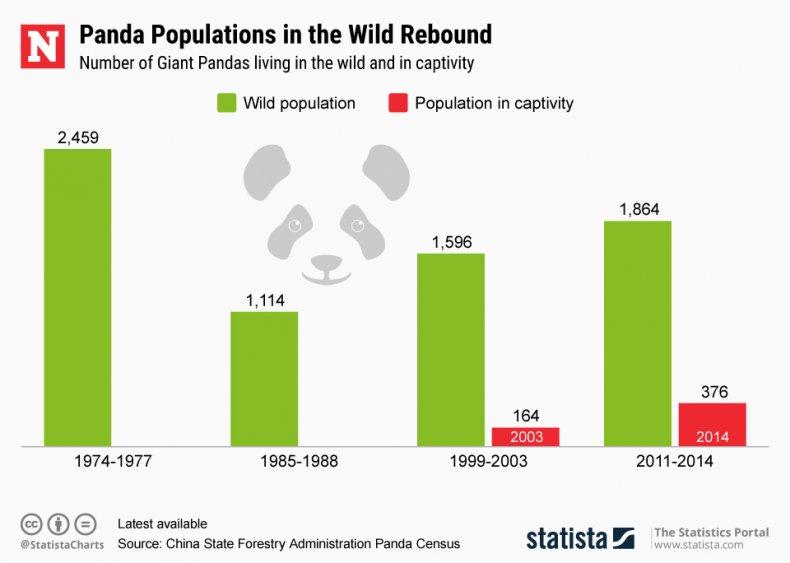 Giant Panda Statista