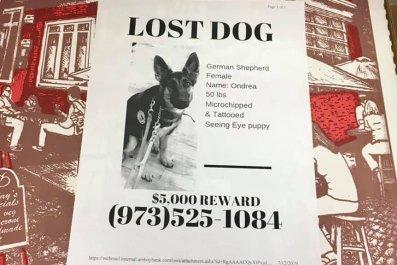 lost dog pizza box