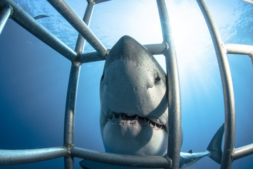 How to Live Stream Shark Week 2019: Watch 'Expedition