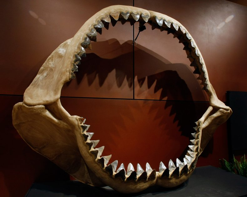 Shark Week's 'Expedition Unknown' Explores the Demise of Megalodon