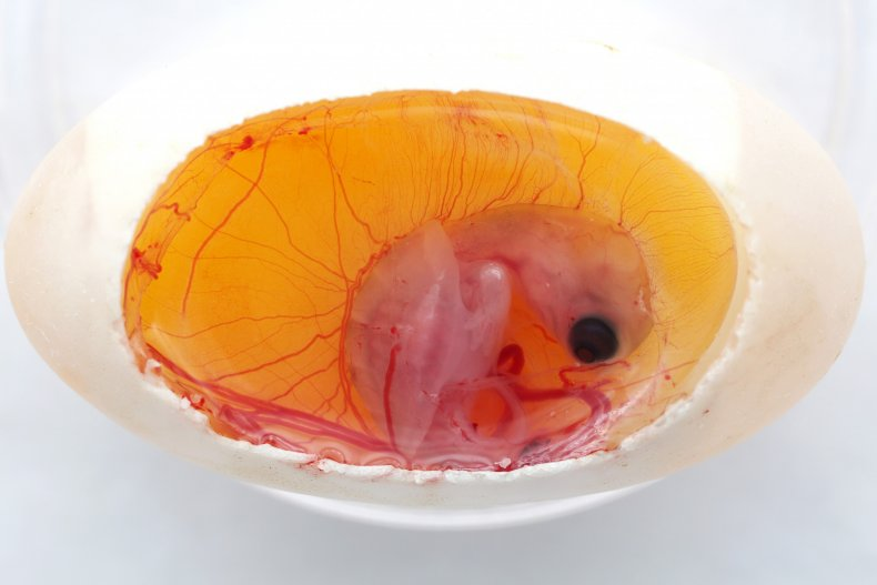 turtle embryo, Current Biology,