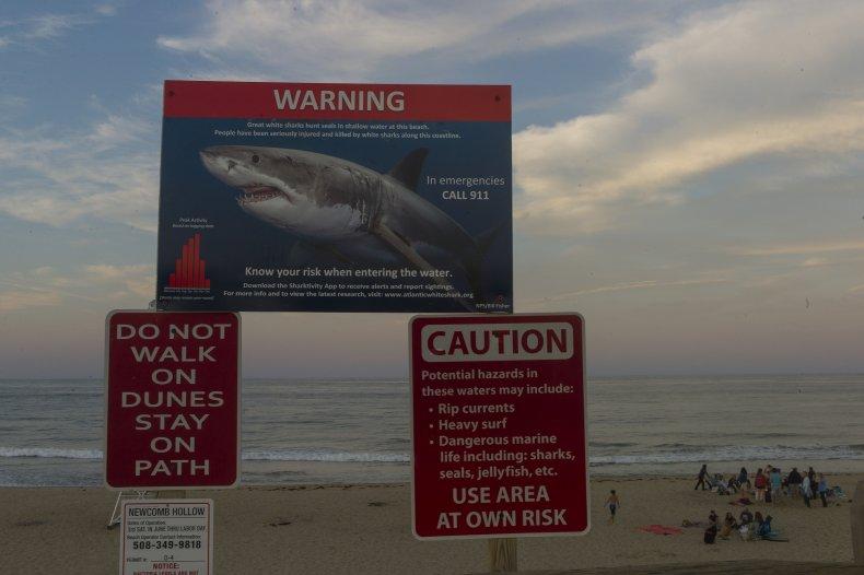 shark week blood water sharks mark rober