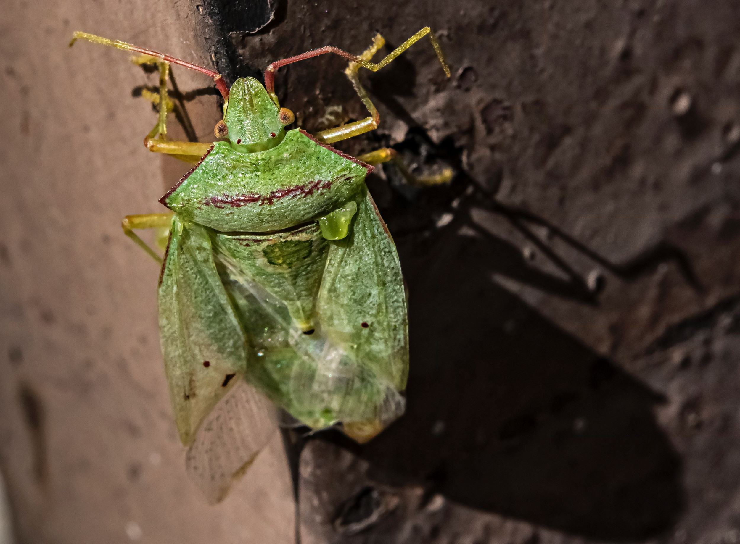 Swarms of Stink Bugs Invade Southern Utah: 'Never Seen