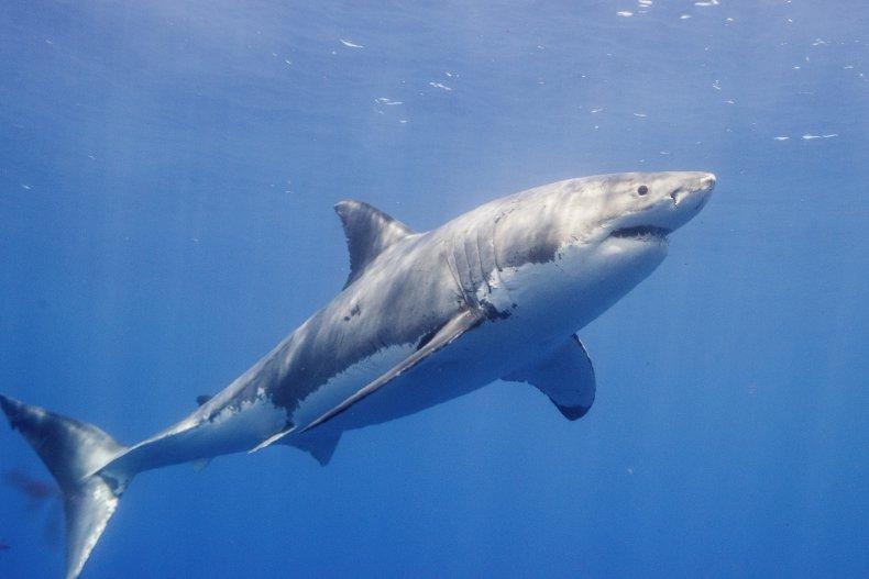 shark week schedule end date