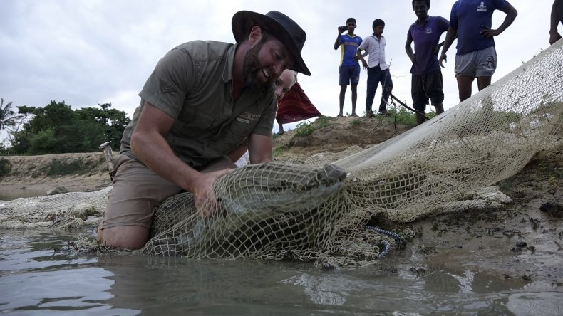 Forrest Galante, shark week, crocodile, pondicherry,