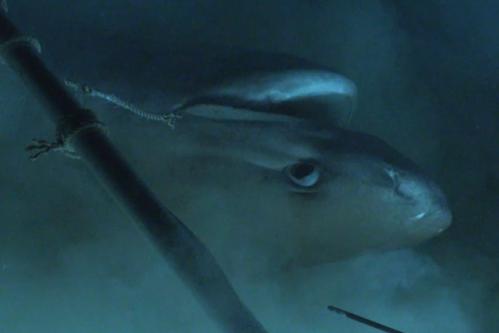 Video: North Carolina Man Gets Bitten By Blacktip Shark