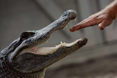 Alligator Florida Hand