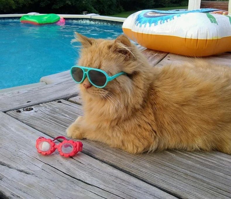 tissy swimming cat