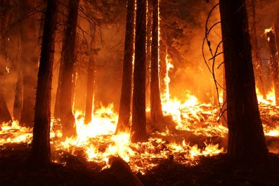 forest fire, rim fire, Stanislaus National Forest,California