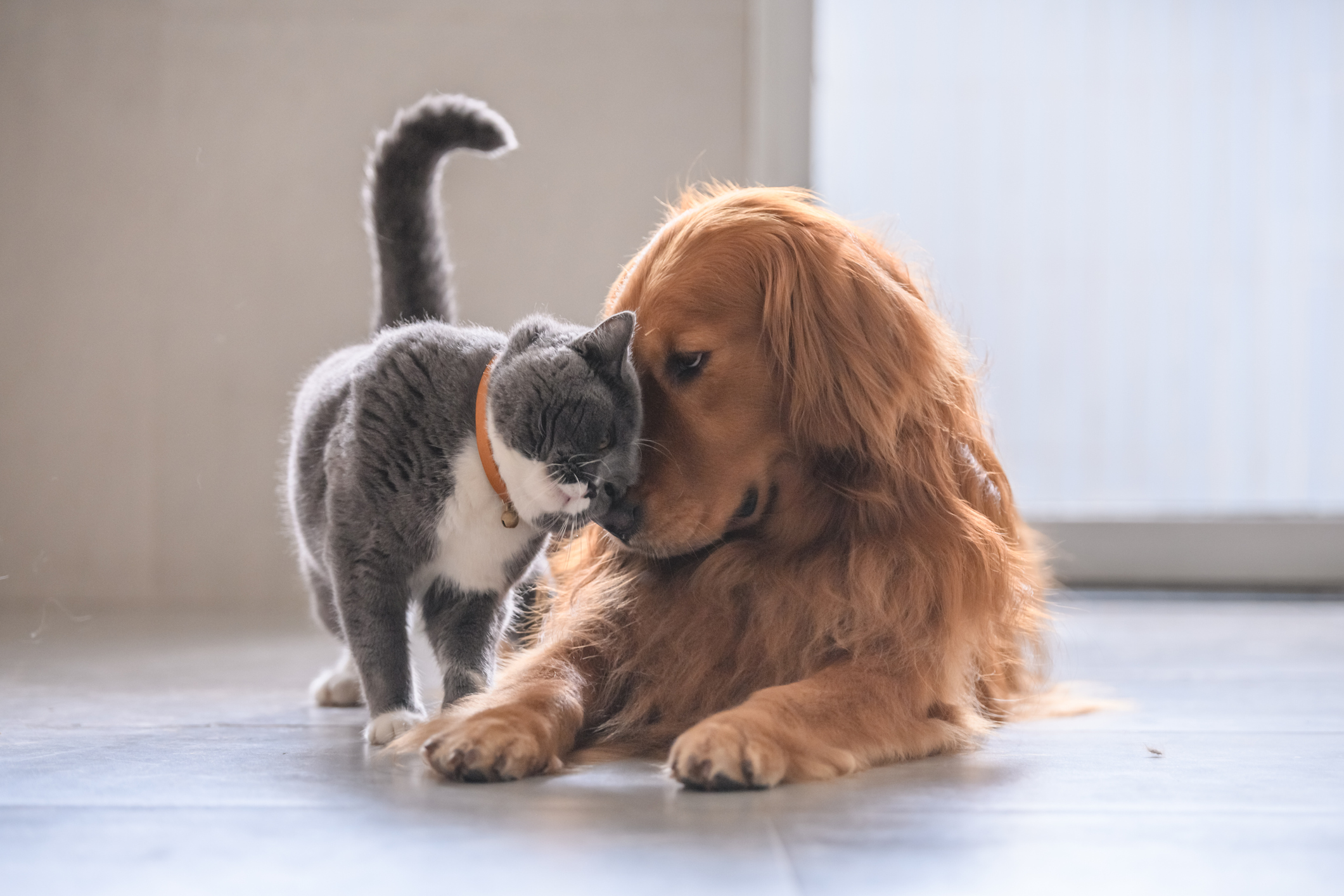 International Cat Day: Why Cats are Better than Dogs, According to