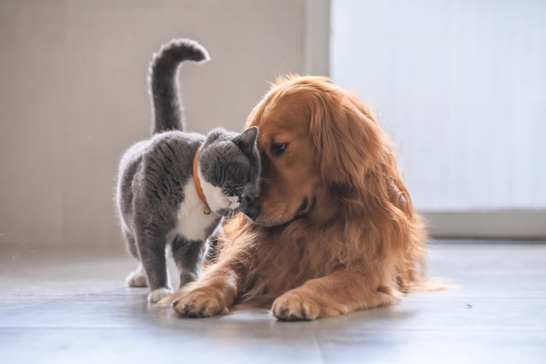 cat vs dog international cat day