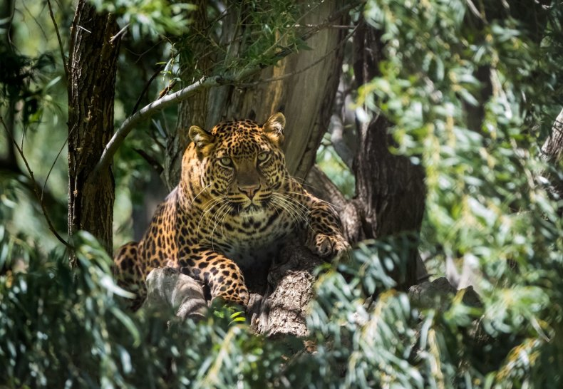 Leopard Lions Park