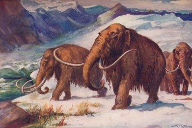 woolly mammoths