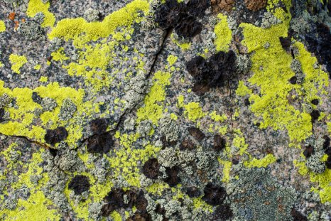 Lichen on pavement
