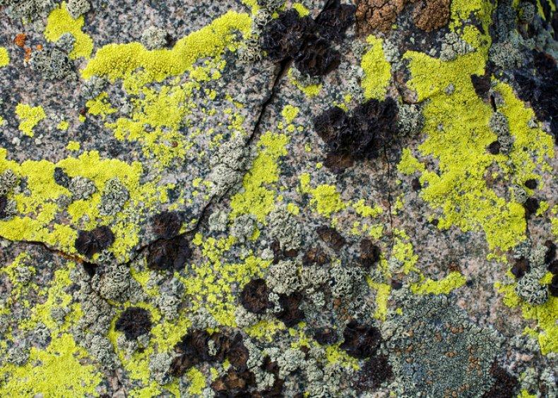 Lichen on pavement