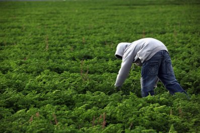 Colorado Farm Suffers As Immigrant Workforce Diminishes