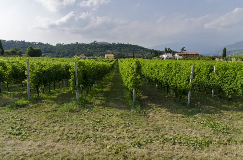 Bardolino Italy vineyards