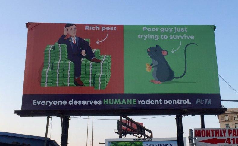 "PETA billboard calls Jared Kushner ""rich pest"""