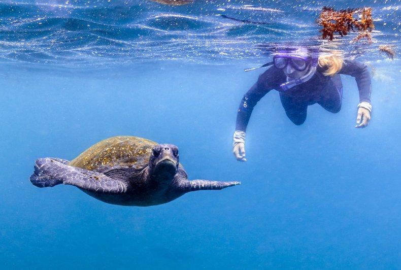 Turtles Galapagos