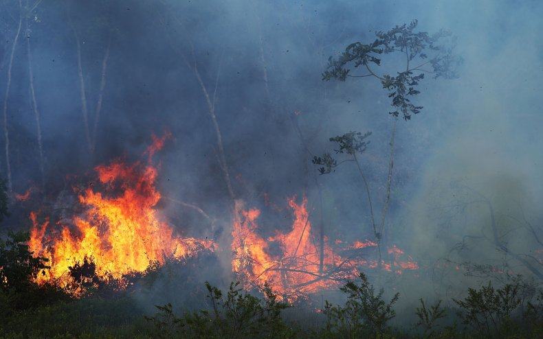 Brazil Amazon fire